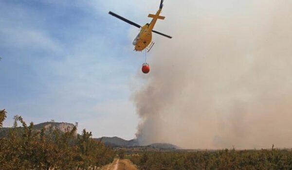 Pedroches: La Cooperativa Olivarera pide ayudas al olivar de sierra como elemento preventivo de incendios